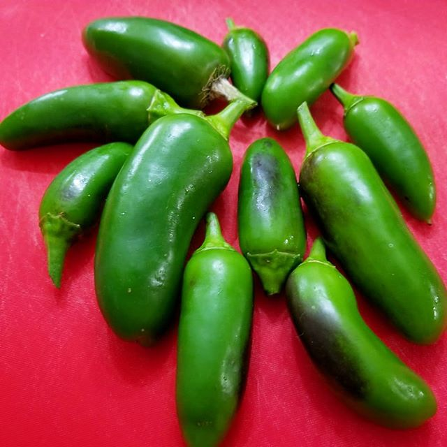 Coolapeño Peppers